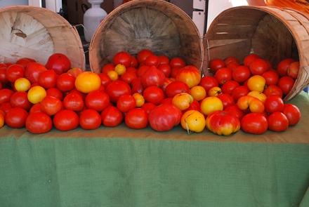 TomatoesSFM