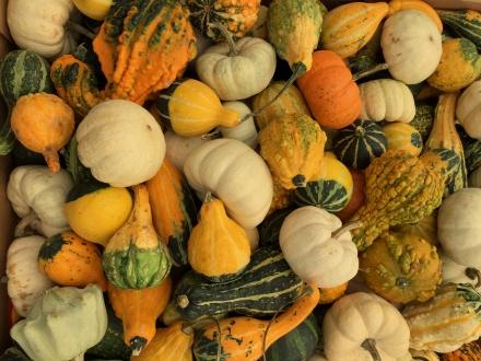 SFM-Gourds